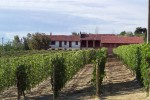 Vineyards – Ascheri 3
